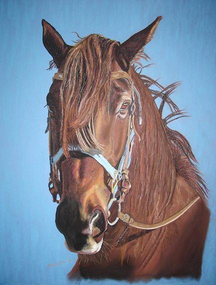 Komet Half-bred, has won an Honorable  Mention in Ex Arte Equinus II