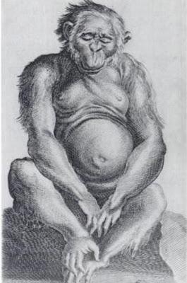 Dr Tulp, Medicarum Libri Tres, Homo Sylvestris Orangutangus,1641