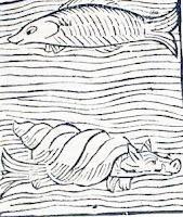 porco-ostra