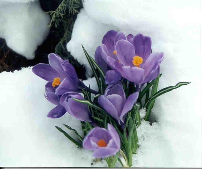 April flores her little secret - 5 5