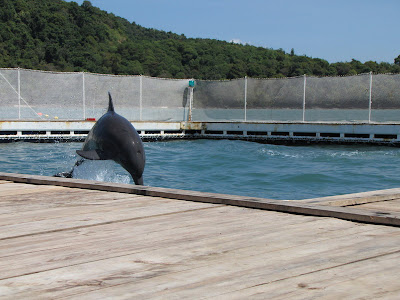 dolphins+1.jpg
