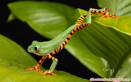 The Best Wallpaper Blog: Bing Best Nature Theme Pack