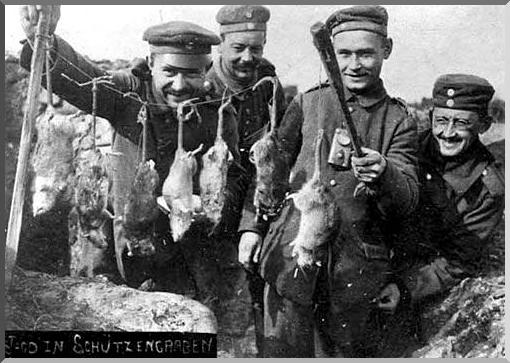 trench ww1 rats