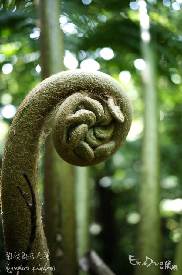 蘭嶼的蕨 (下) | | | | | 弱智花園手記 The Idiotic Garden Notandum