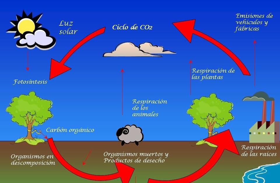 Regulacion del ciclo celular yahoo dating 1