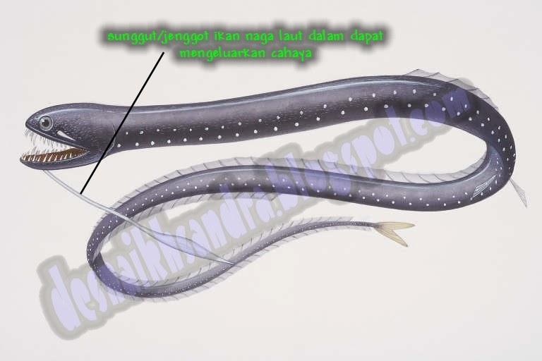 Mengapa Ikan Naga Bawah Laut Mampu Mengeluarkan Cahaya