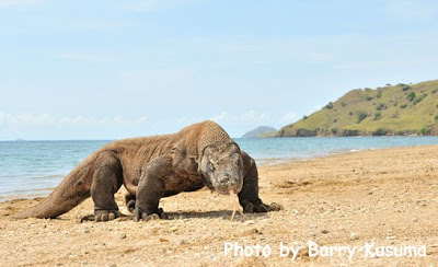 Pulau Komodo, New 7 Wonders of Nature.
