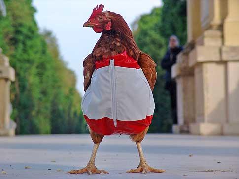 Crazy Chicken 23