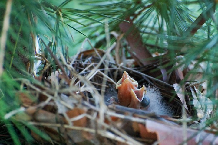 Yak Talk: Saving Baby Birds