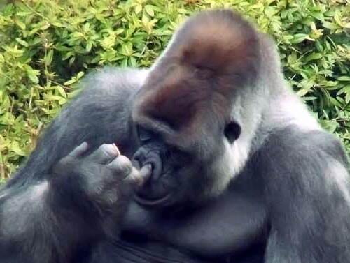 Frases De Mono: La Frase Cachonda Del Día + Monos