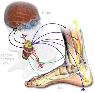 mi a miokardiális hipertónia