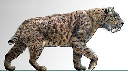 Sabre Cat Long Tail