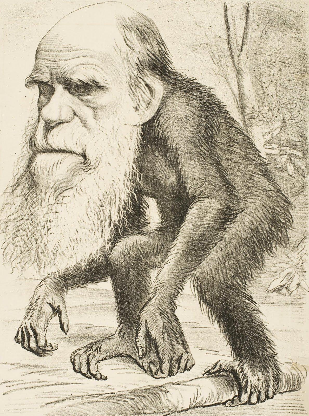 Origin Of Species Natural History Museum
