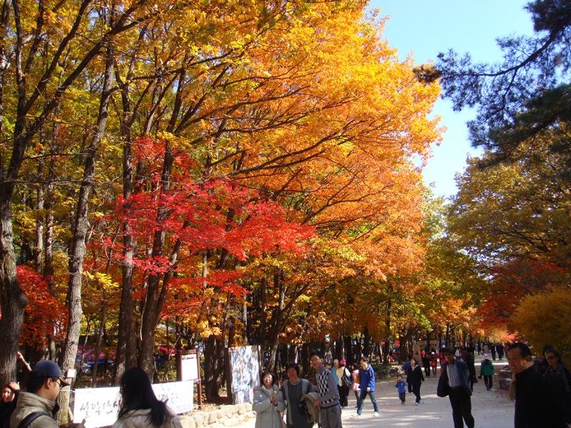 november seoul korea early late fall everything