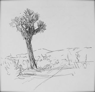 Open To the Wind: Joshua Tree Drawings