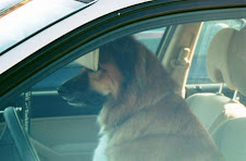 When is it Too Hot to Leave a Dog in the Car?