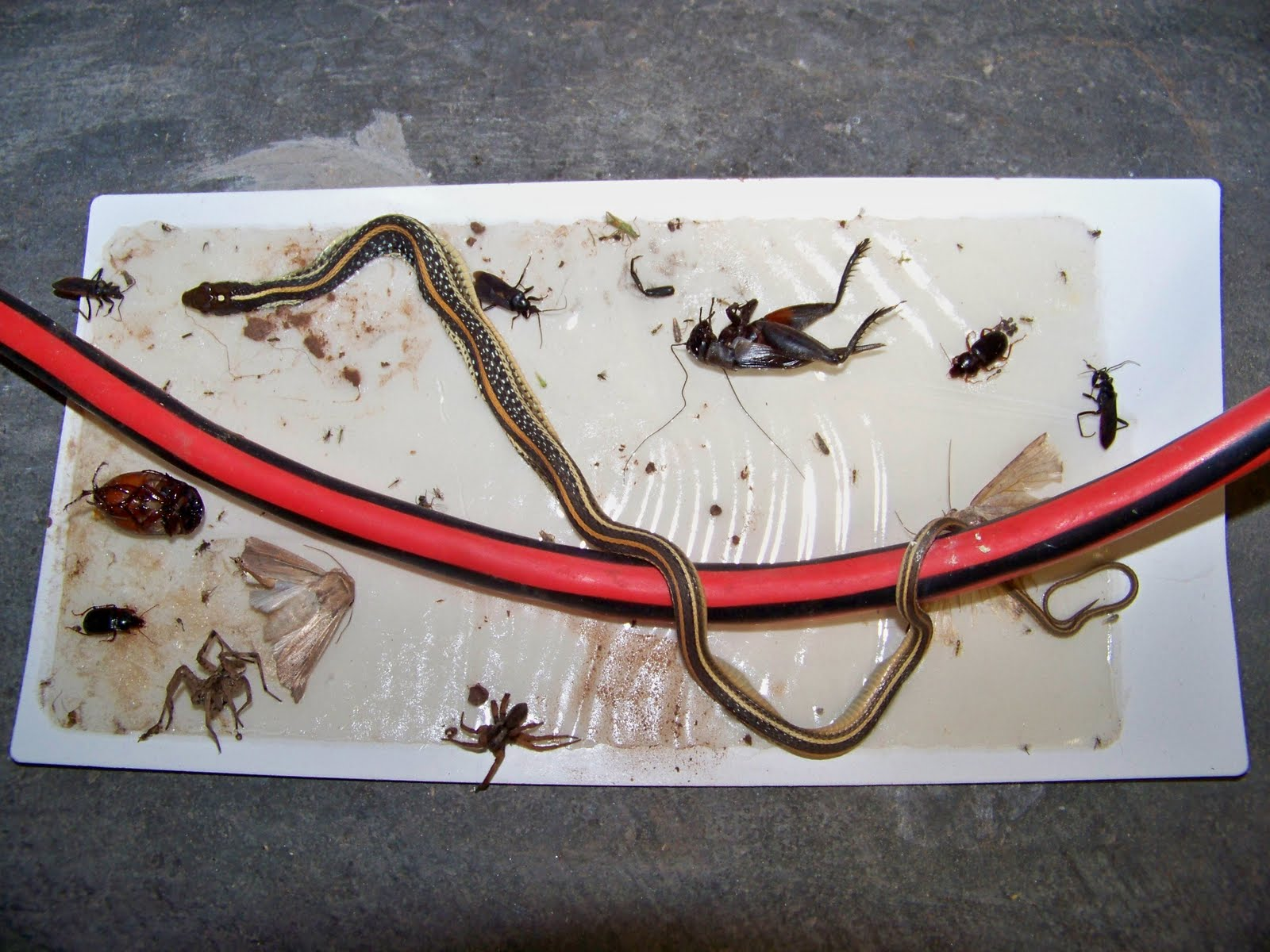 Snake traps that work myideasbedroom com