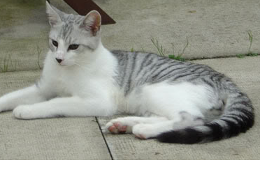 Warrior Cats Blossomkit FalconClan: Lots of Ne...