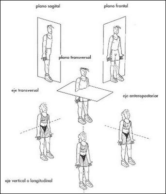 Educaci n f sica aqu y ahora dimensi n mec nica for Planimetria interna