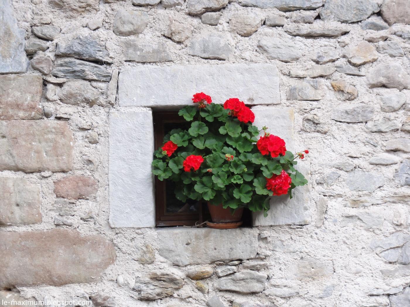 le maximum pot de fleur dans un mur photo et fond d 39 cran gratuit. Black Bedroom Furniture Sets. Home Design Ideas