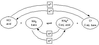 Study Palace: Conjugate acid and base