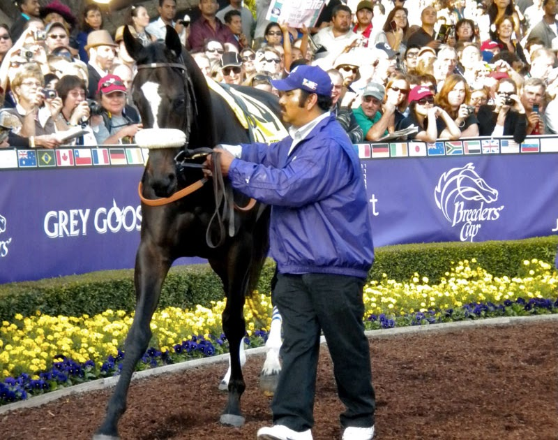 Mary Forney S Blog Zenyatta A Horse For The People