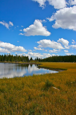 Grasses grow in abundance around Native Lake Colorado. Some day it will be just a memory.
