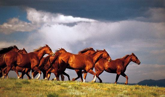 Cavalos selvagens de um Roraima distante na tríade fronteira...