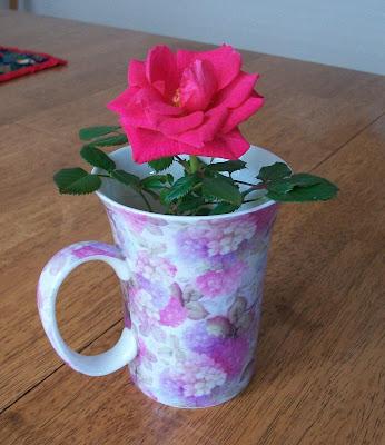 baby spring rose