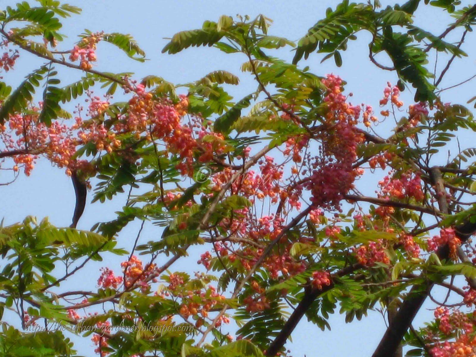Summer Flower: Summer Flowering Trees