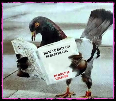 pigeon reading books