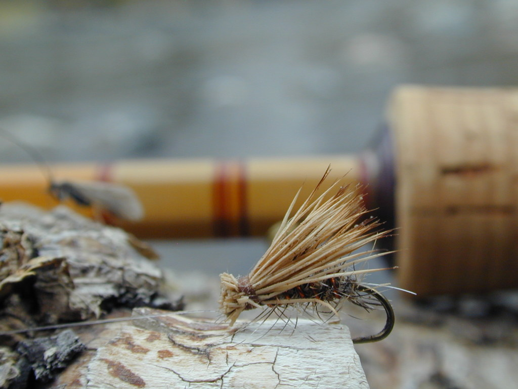 trout fly fishing wallpaper - photo #31