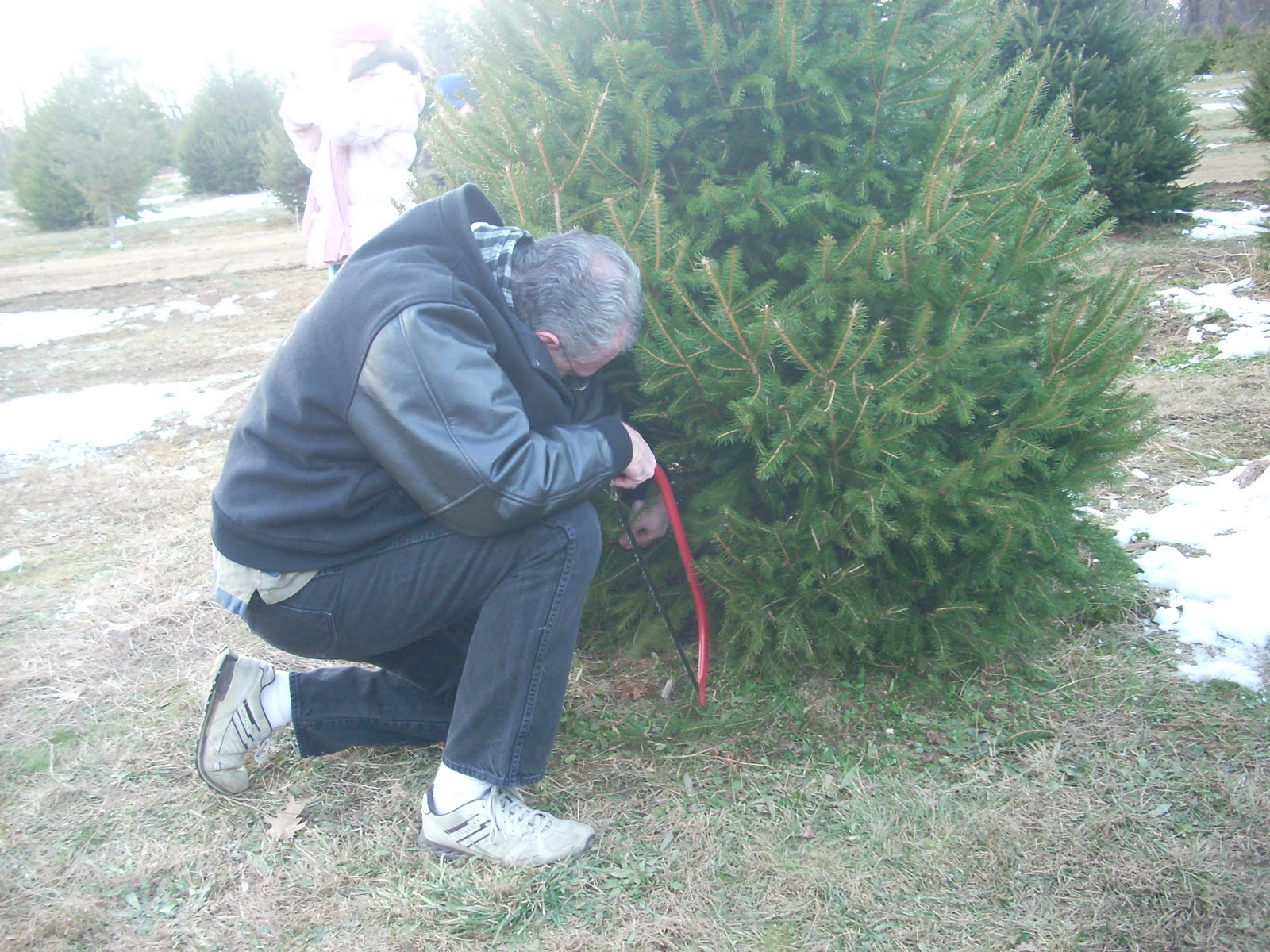 435701daa3f CUT-YOUR-OWN CHRISTMAS TREE FARMS IN NEW JERSEY.