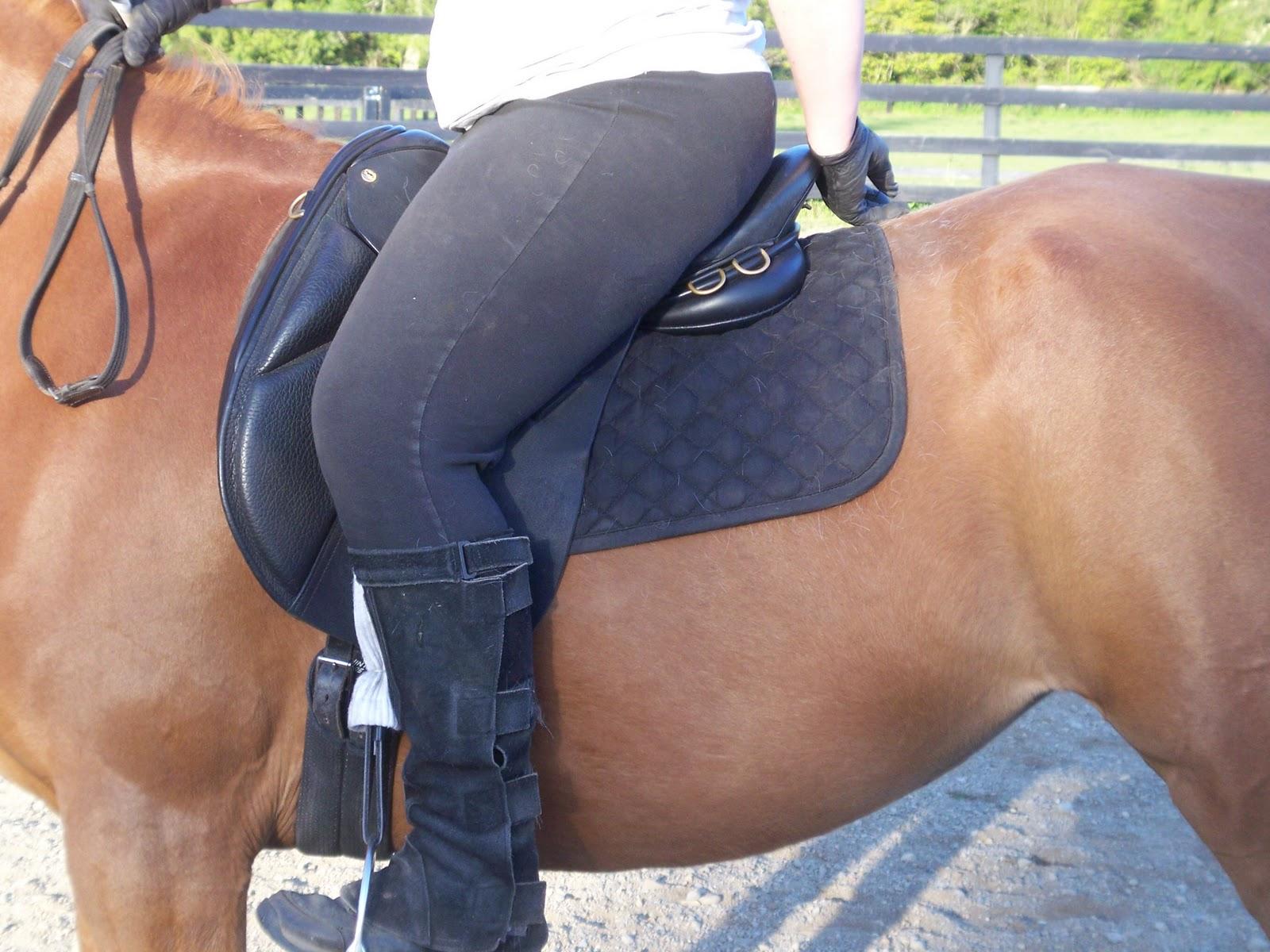 Northwest Desert Horses: Searching for a saddle