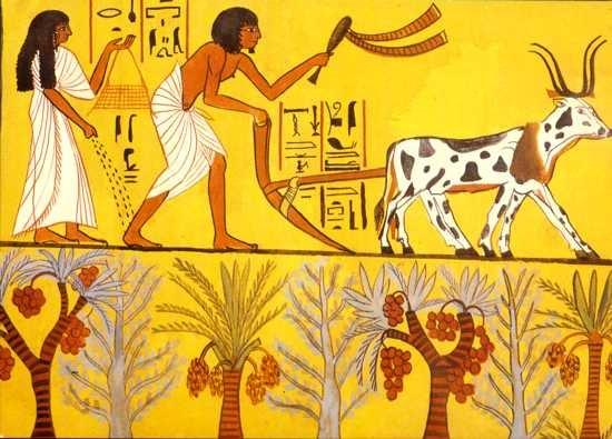 Aulabierta Los Campesinos En El Antiguo Egipto