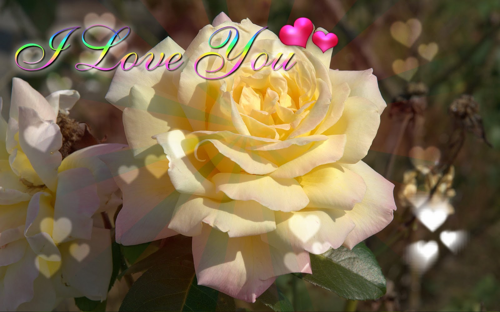 Sweet Wallpaper With Quotes Yellow Flower Valentine S Day Greeting Cards 2017
