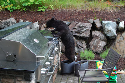 Bears in your backyard? Get Bear Smart