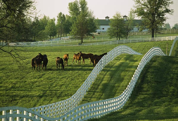 Willow Grove Stables Lexington Horse Country