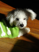 Snowball In His Sweater