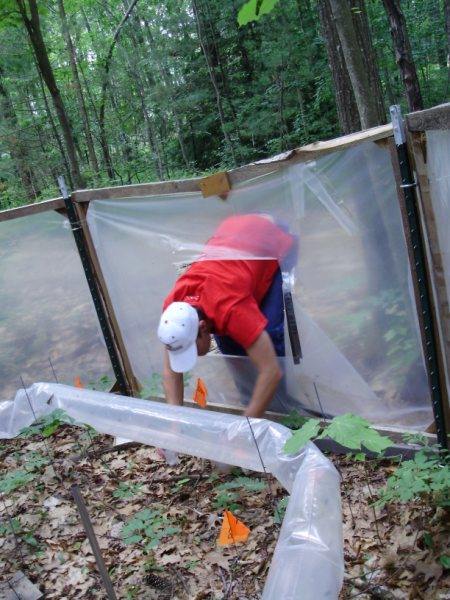 Harvard Forest: Harvard Forest Summer Research Program: PROJECT PROFILE