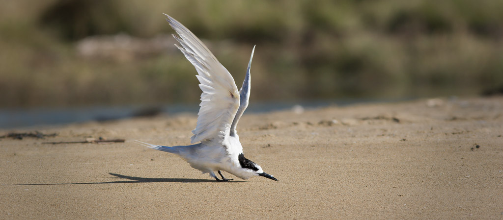 Tern doing yoga