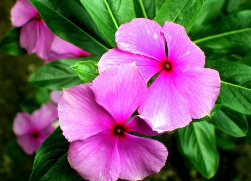 Drika Curiosa: Flor Boa Noite