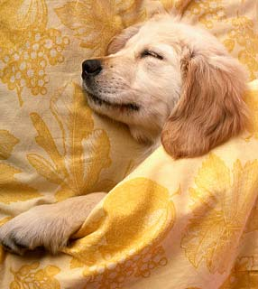 Neutralizzare gli odori degli animale dentro casa - Eliminare gli odori in casa ...