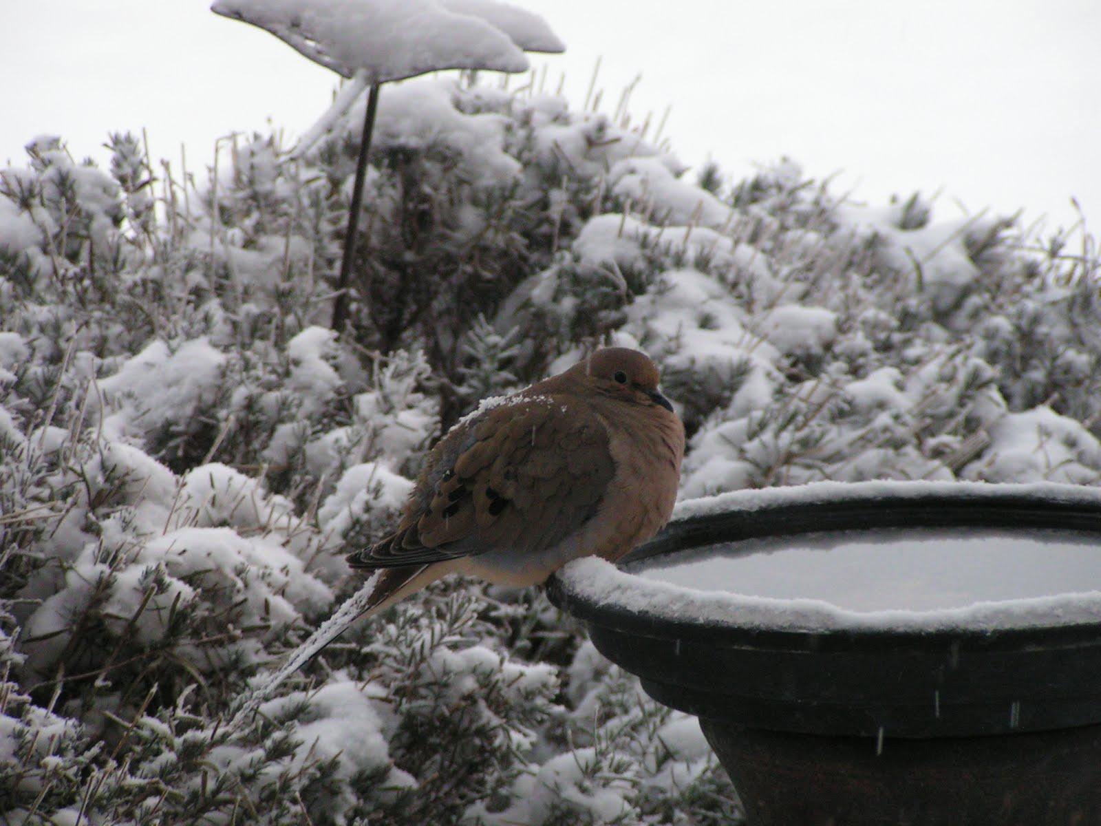 Birding Is Fun!: Idaho Camera Birding Photo Competition