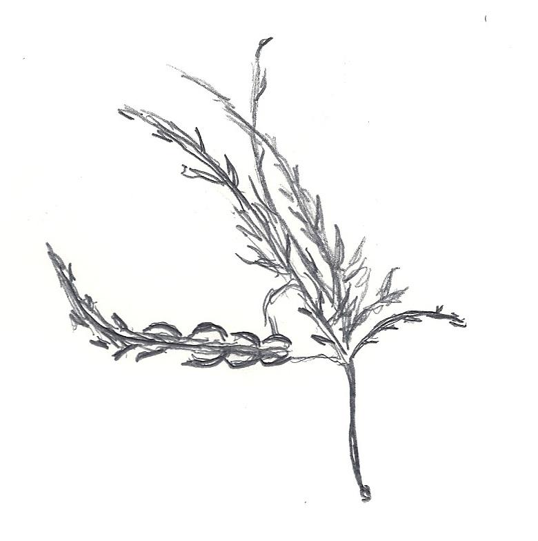 Design by Monica: Observational Leaf Drawing