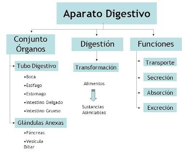 Mapa Conceptual Aparato Digestivo.Mapa Conceptual 452 Sistema Digestivo