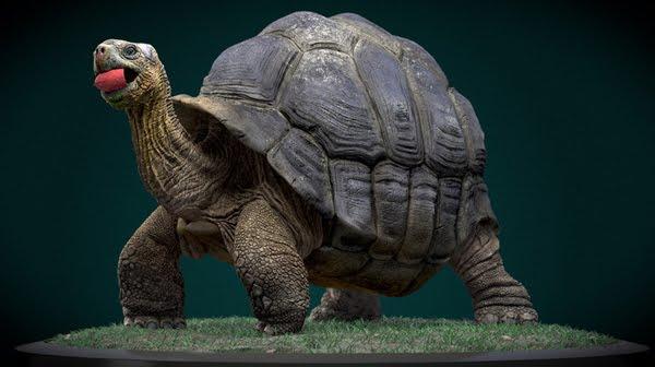 Galapagos Giant Tortoise 3d