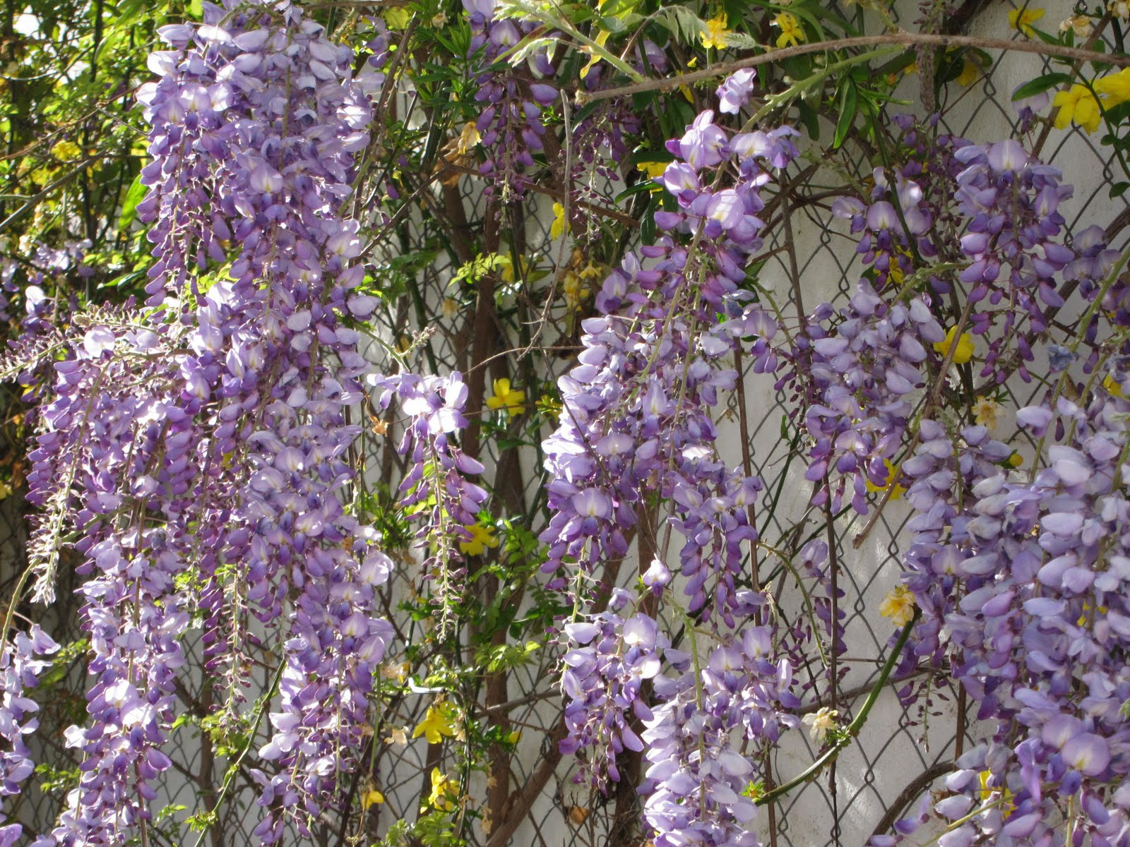 Flores Lilas Nombres Elegant Hd Rights Managed Stock Footage With