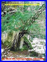 Nº 11 La Roca y el Tejo Centenario. . Reserva Natural del Río Urederra. Parque Natural Urbasa. Ruta de las Cascadas desde Baquedano. Centro de Turismo Rural y Agroturismo  Casa Rural Navarra Urbasa Urederra. Ven a conocernos… te sorprenderás
