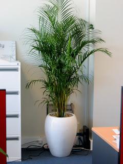 Design Formula Big Indoor Plants
